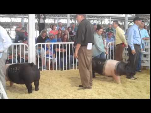 2014 WPX Champion and Reserve Hampshire Gilts Sell
