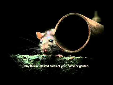 Rat distress call. Scares rats out of you home, garden, shed