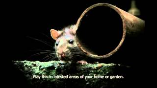 Rat distress call. Scares rats out of you home, garden, sheds etc. Get rid of rats humanely