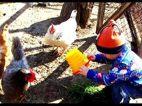 У бабушки в гостях Бабушка и внучек кормят курочек Диалог бабушки и внучека Гриши :)
