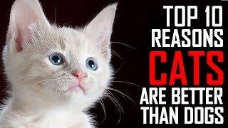 Top 10 Reasons Why Cats are Better than Dogs