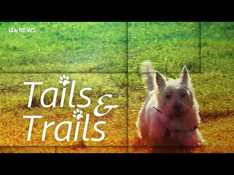 A countryside dog walk in East Anglia steeped in history | ITV News