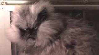 Игровой видеоролик про кошек  videoplayback