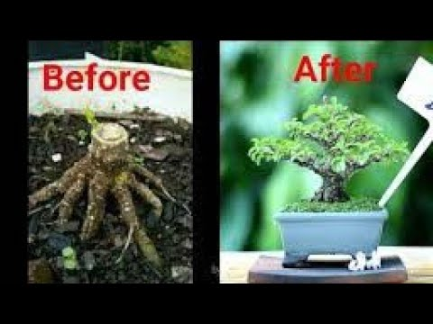 step-by-step-membuat-bonsai-anting-putri-mame