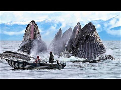 13 Incredible Whale Photos
