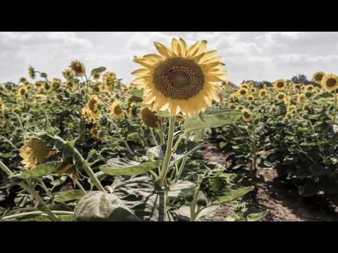 Moby's Long Ambients Track 7 set to beautiful flower pictures