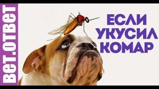 Что делать если собаку укусил комар? Вет Ответ.