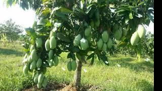 Khmer Cambodia Song Music News New Nice Views 2019 Cambodian Farm Evergreen