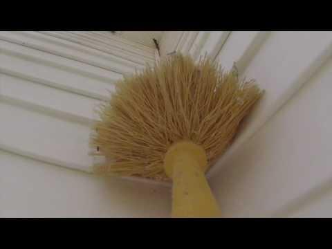 Basic Pest Service -PESTECH