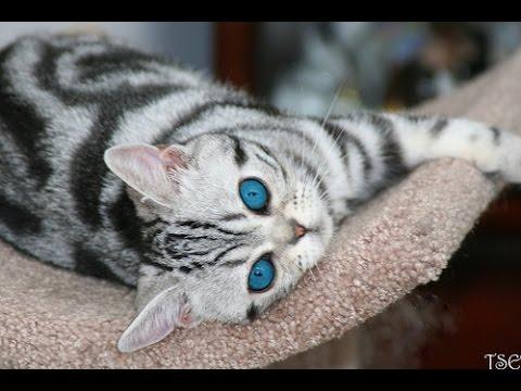 Los 5 Gatos M 225 S Incre 237 Bles Del Mundo Gatos Curiosos