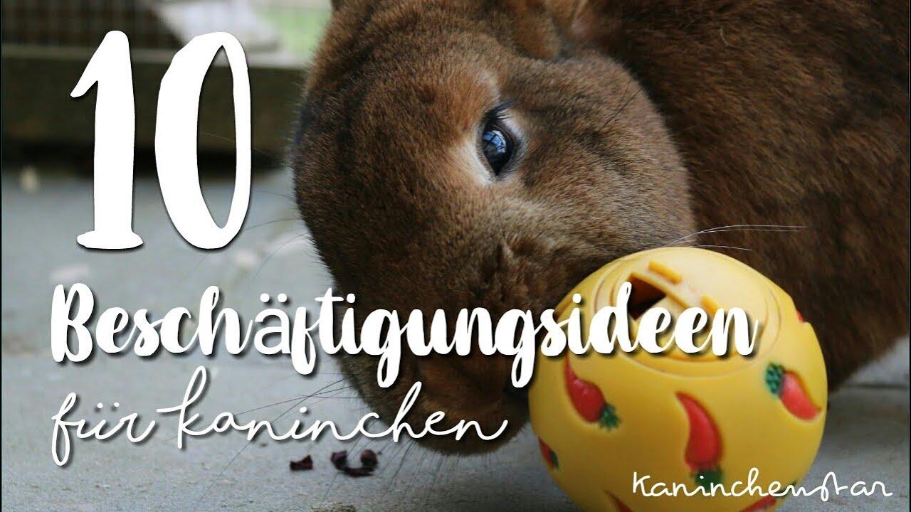 8 BESCHÄFTIGUNGEN für Kaninchen   Kaninchenstar