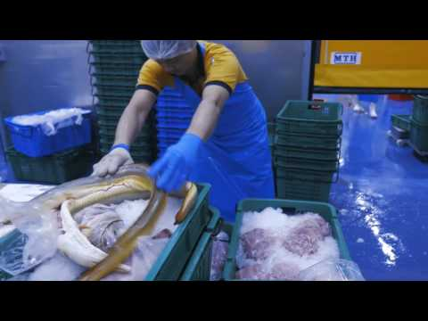 Fish Merchant - Jurong Fishery Port