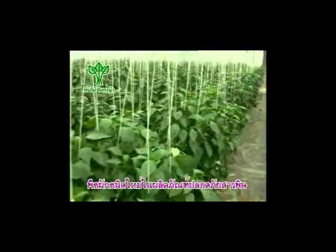 การปลูกพืชผักในโรงเรือน
