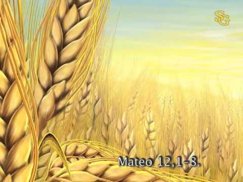 Resultado de imagen para Mateo 12,1-8
