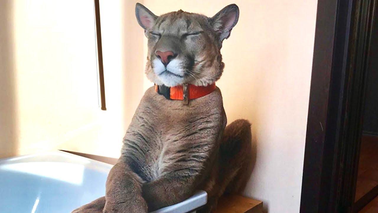 Puma ADOPTIERT  