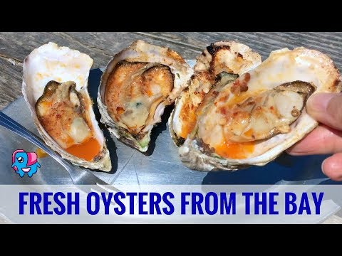 Hog Island Oyster Farm: North Of San Francisco On Tomales Bay