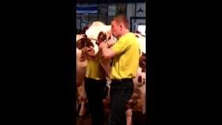 Concours National Normand 2013 - Concours des jeunes éleveurs