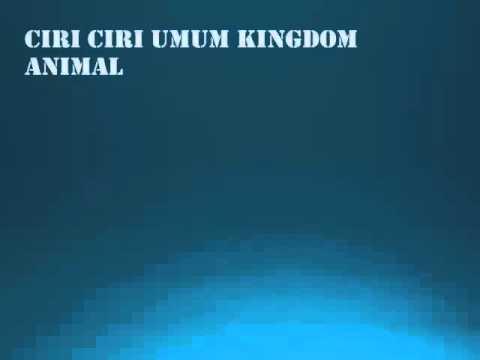 Image of: Peta Konsep Kingdom Animalia Invertebrata Youtube Kingdom Animalia Invertebrata Youtube