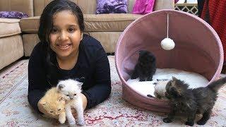 ثمانية قطط جميلة لشفا !!