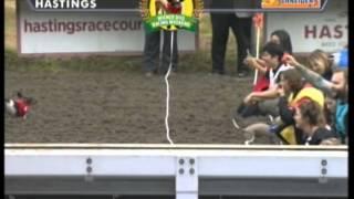 2015 Hastings Wiener Dog Races Heat3
