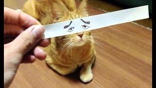 приколы про кошек смотреть онлайн 2015