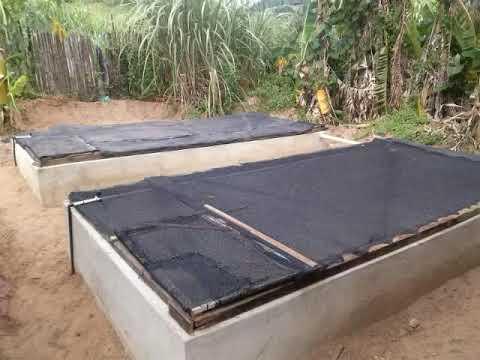 Cria o de til pias em casa 6 2 39 constru o tanque 39 doovi for Cria de tilapia en casa
