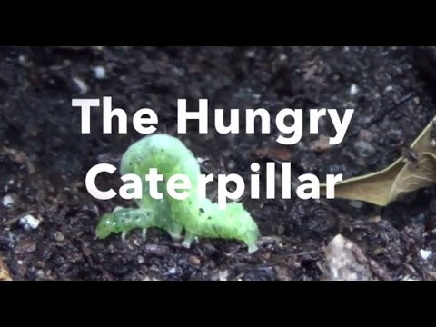 the hungry caterpillar story youtube. Black Bedroom Furniture Sets. Home Design Ideas