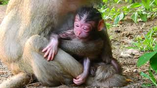Congrats! Monkey Fauna Just Delivered a Newborn 1h Ago( girl). Newborn So Cute. We Will Name Later.