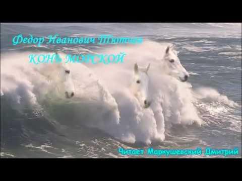 Изображение предпросмотра прочтения – ДмитрийМаркушевский читает произведение «Конь морской» Ф.И.Тютчева