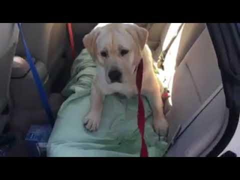sophia-learning-car-manners