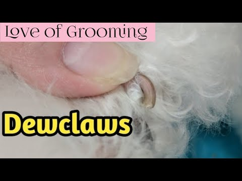 Trimming/Clipping Dewclaws