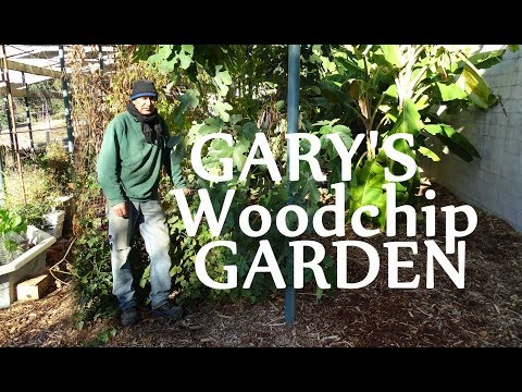 Banana Trees Growing in Woodchips Gary's Garden Cold Frost Morning