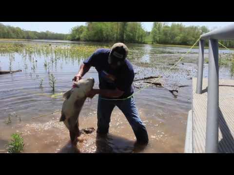 AMS Bowfishing 2017 ATA Video