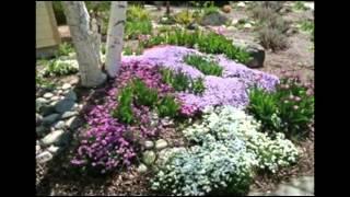 Цветочные клумбы под деревом Идеи для сада
