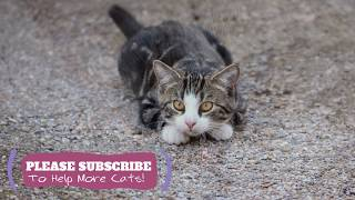 2 Hours  Relaxing Music for Cats! Help Your Cat Anxious or Restless with Music ☯LCZ107