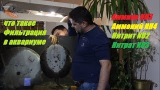 Фильтрация в аквариуме, ее виды. Аммиак, аммоний, нитрит и нитрат в аквариумной воде