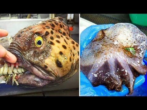 Tiere aus der Hölle. 10 schrecklichste Tiere der Welt!