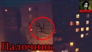 Истории на ночь: Палочник - Закрывайте на ночь окна!