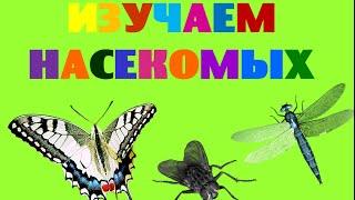 Изучаем насекомых. Насекомые для детей. Развивающее видео про насекомых