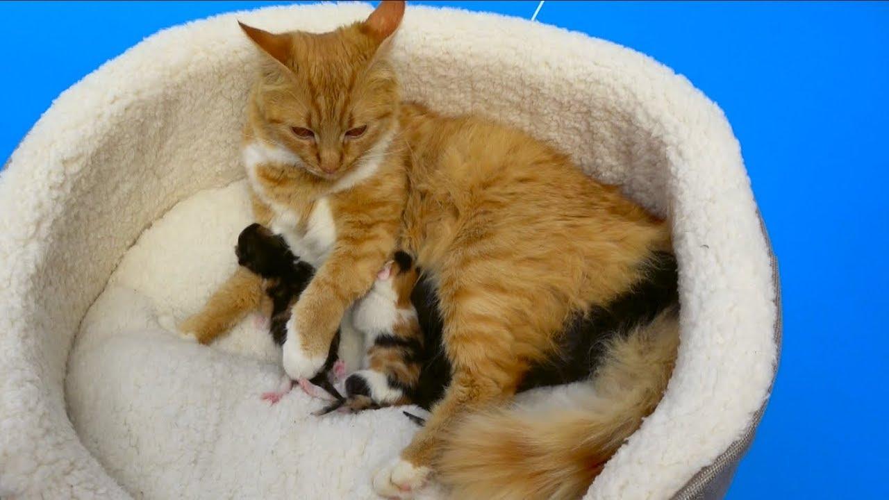Cat baby Shower / Сколько котят родила КОШЕЧКА Мурка ?