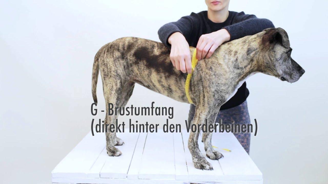 happystaffy.me - Hundebekleidung nach Maß - Ausmessanleitung - YouTube