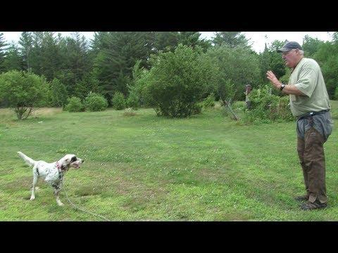 Dave Hughes Teaches Whoa & Steadiness