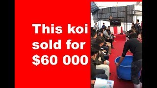 This Koi sold for $60 000