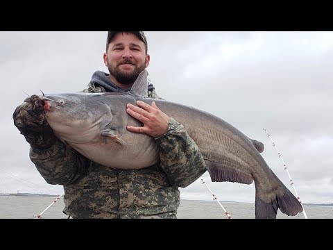 Catfishing The Cumberland River - How To Locate/catch Massive Catfish!