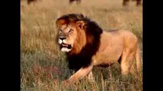 Repeat youtube video Animal Video Sounds for Kids   Animal Sounds    Real Animals   Names, Sounds, and Names
