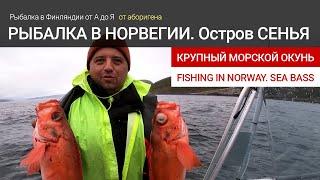 Рыбалка в Норвегии на острове Сенья Морской окунь Fishing in Norway Senja island Big Sea bass