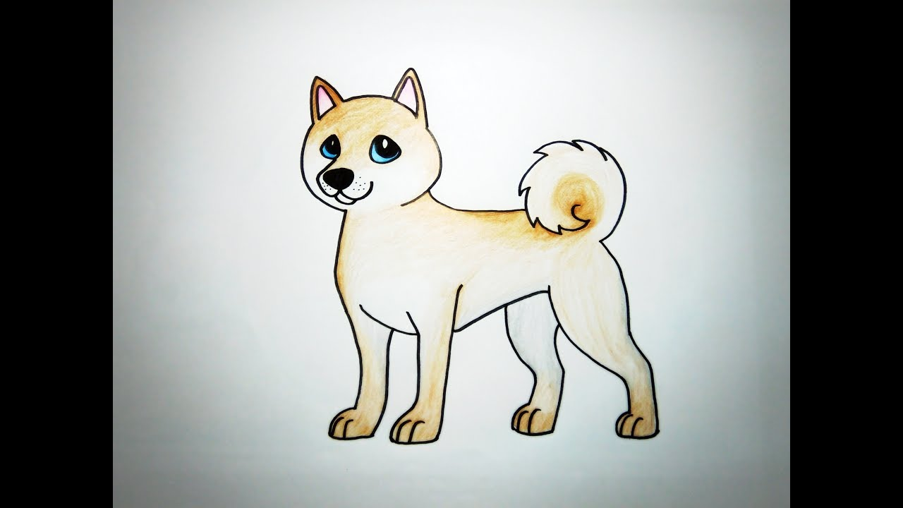 วาดรูปสุนัข ชิบะ อินุ How To Draw Cute Shiba Inu Dog