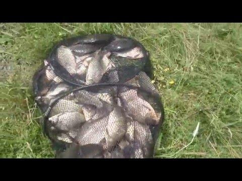 рыбхоз прогноз клева в днепропетровской области макорты