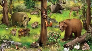 Лесные животные для малыша_Карточки Домиана-лесные животные_Развивающее видео для самых маленьких.