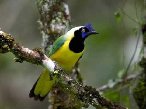 Le Petit Oiseau De Tout Les couleurs - Gilbert Becaud.wmv